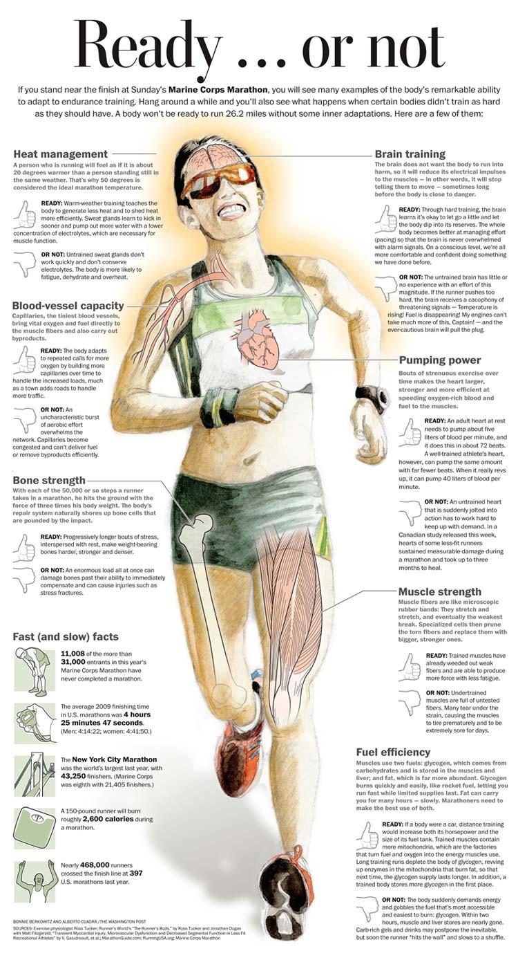 running a marathon infographic