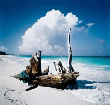 beach life 004
