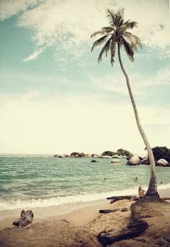 Beach Life 028