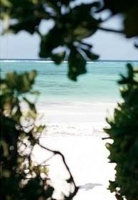 beach life 043