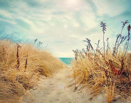 beach life 060