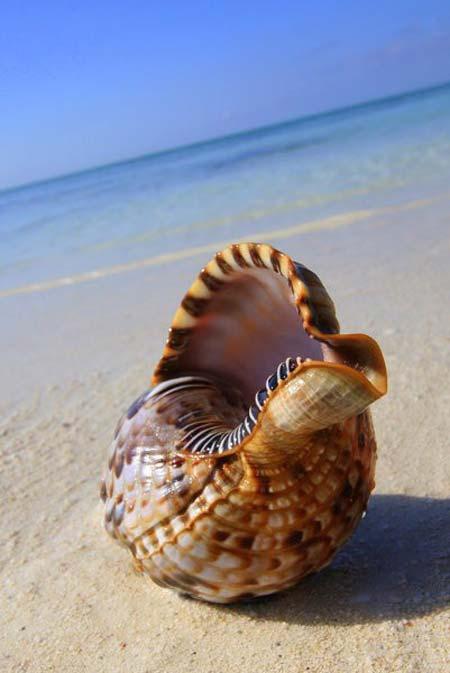 beach life 068
