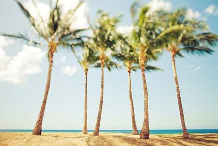 beach life 075