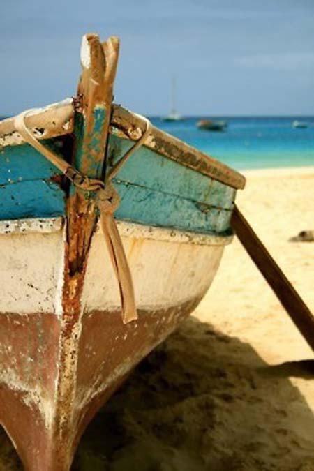 beach life 100