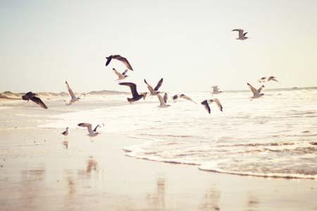 beach life 101
