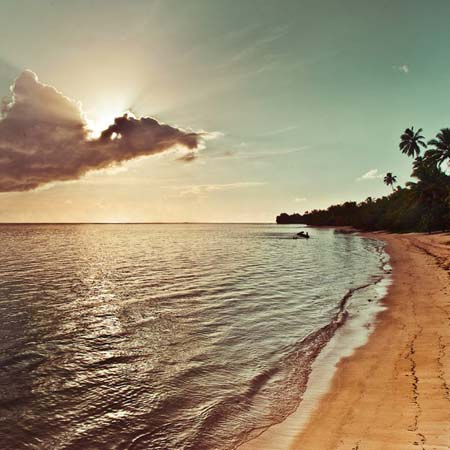 beach life 110