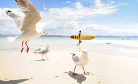 beach life 152
