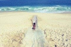 beach life 188