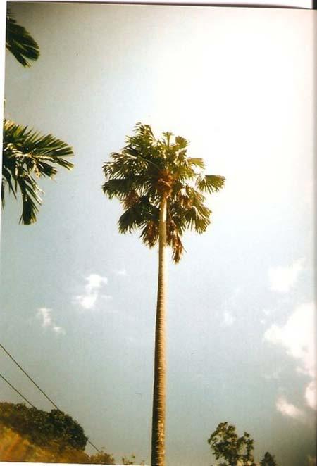 beach life 191