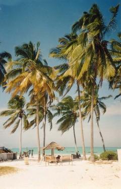 beach life 198